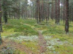 Rundgang über eine finnische Schäre